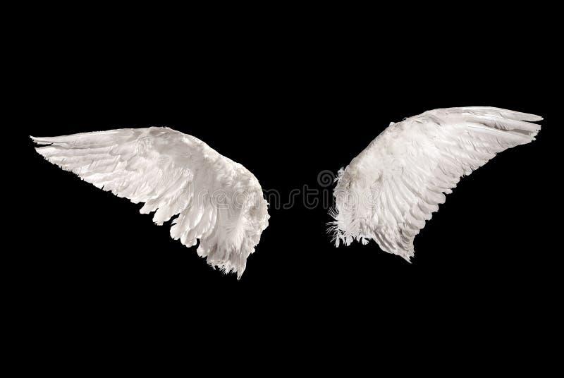 Vleugels over zwarte royalty-vrije stock foto