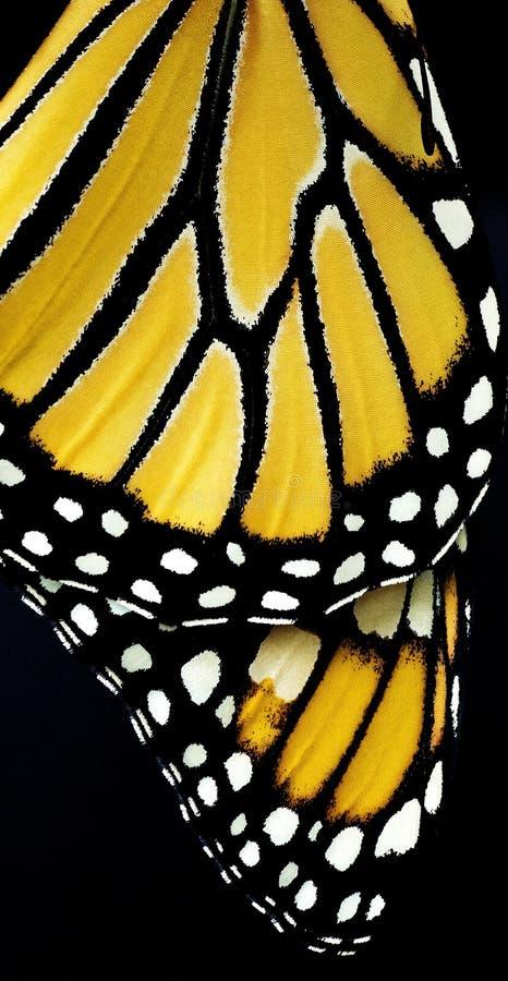 Vleugels van een Vlinder stock foto's