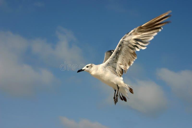 Vleugels van vlucht royalty-vrije stock foto