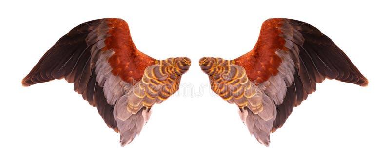 Vleugels van vogels op een witte bacground royalty-vrije illustratie
