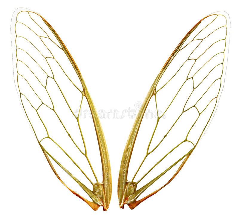 Vleugels (wth Weg) stock foto's