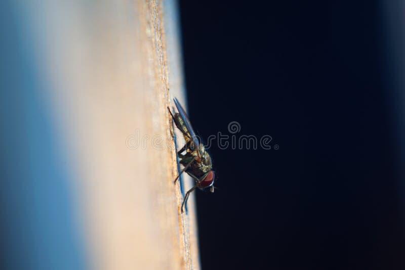 vlieg stock afbeelding