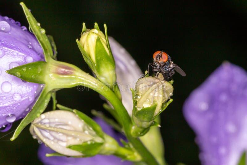 Vlieg op bloem Macrophoto stock foto's