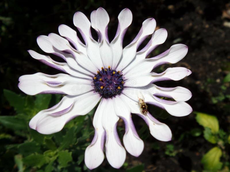 Vlieg op de bloem stock foto