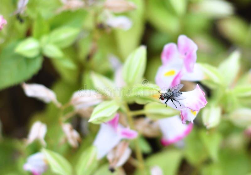 Vlieg op de bloem, HD-het beeld van het vliegdetail royalty-vrije stock fotografie