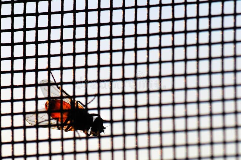 Vlieg op de voorruit stock afbeelding