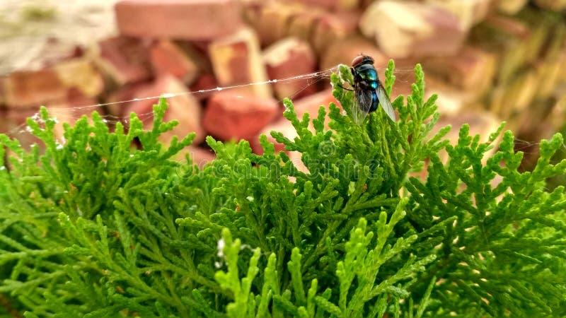 Vlieg op een groene boom royalty-vrije stock fotografie