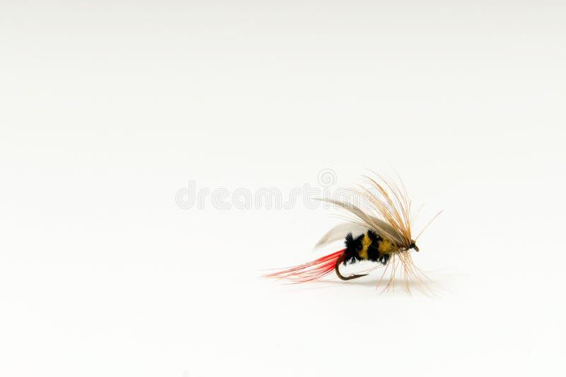 Vlieg visserijvlieg, bijenimitatie voor forel of zalm op witte rug royalty-vrije stock afbeelding