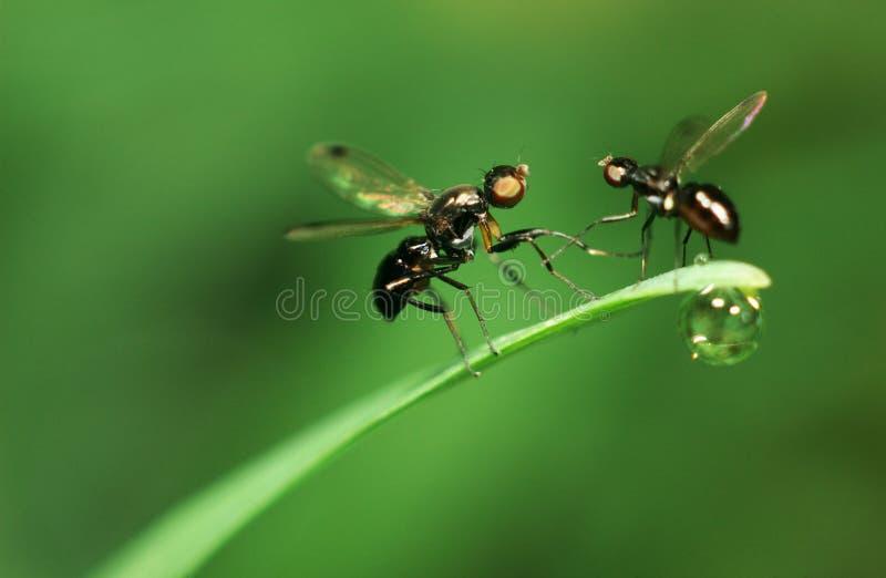 Vliegen stock afbeelding