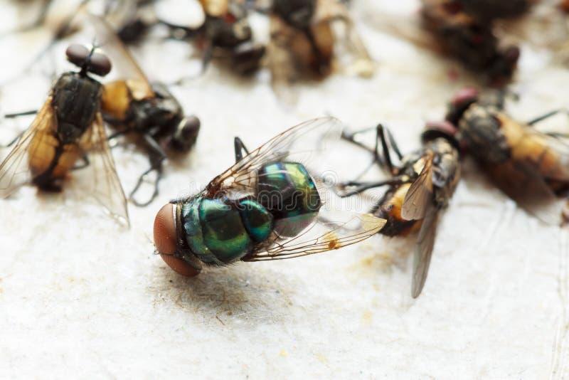 Vliegen op kleverige vliegdocument val s worden gevangen dat stock foto's