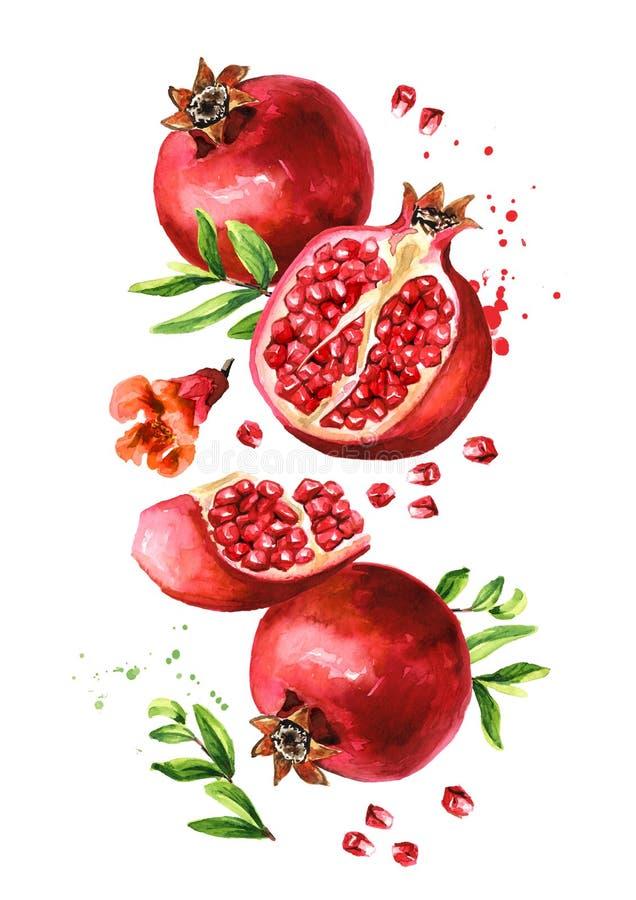 Vliegen van vers rijp en snijden van pomegranen met zaden, bloemen en bladeren Met de hand getekende afbeelding van de waterkleur stock illustratie