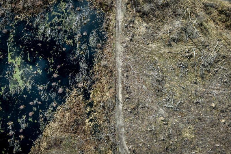 Vliegend boven vreselijk ontbossingsbos voor het oogsten, Polen royalty-vrije stock fotografie