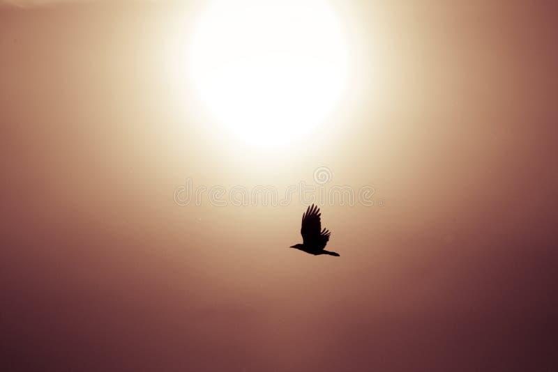 Vliegend vogelsilhouet stock foto's