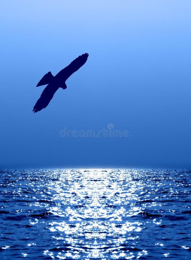 Vliegende adelaar over water dat op zonlicht wijst stock afbeeldingen