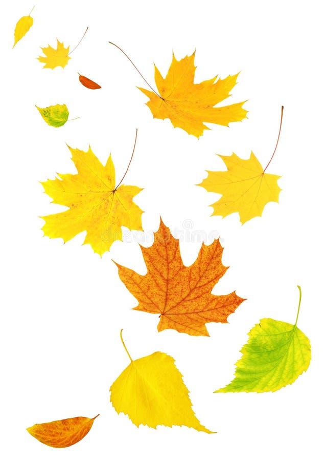 Vliegende de herfstbladeren royalty-vrije stock afbeelding