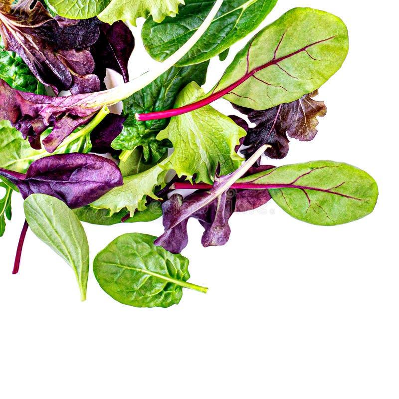 Vliegende die Saladebladeren op witte achtergrond worden geïsoleerd Verse gemengde salade met arugula, sla, spinazie royalty-vrije stock afbeeldingen