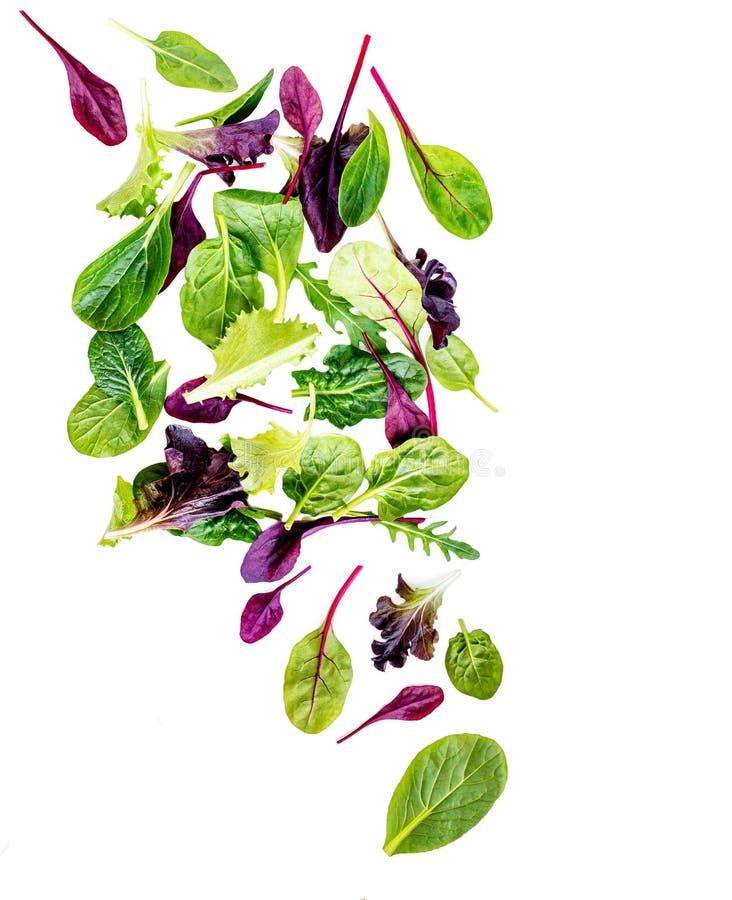 Vliegende die Saladebladeren op witte achtergrond worden geïsoleerd Verse gemengde salade met arugula, sla, spinazie en bietenbla royalty-vrije stock fotografie