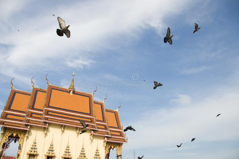 Vliegende duiven op achtergrond van tempel, Weergeven van vogels die in blauwe hemel dichtbij kleurrijke oosterse tempel vliegen royalty-vrije stock foto's