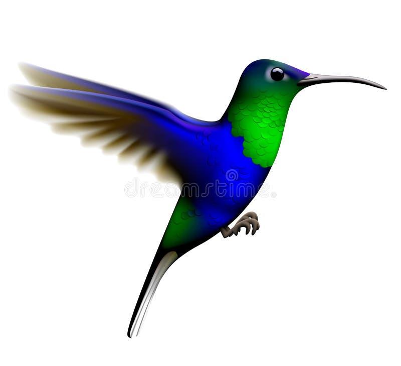 Vliegende groene en blauwe die kolibrie op witte achtergrond wordt geïsoleerd vector illustratie