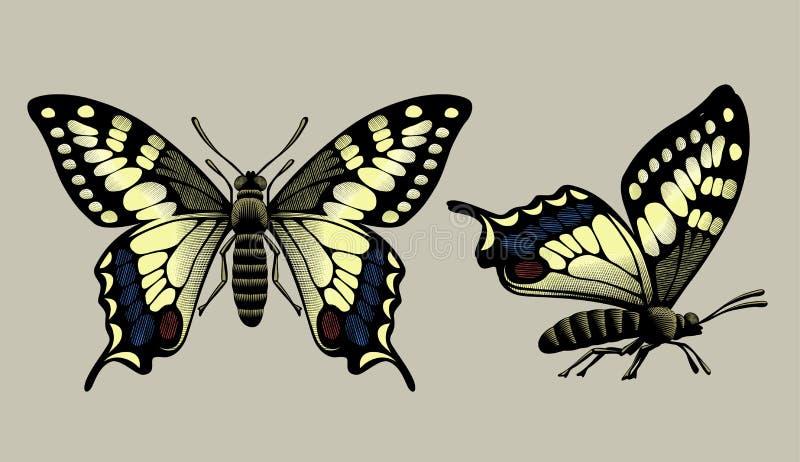 Vliegende groene en blauwe die kolibrie op witte achtergrond wordt geïsoleerd royalty-vrije illustratie