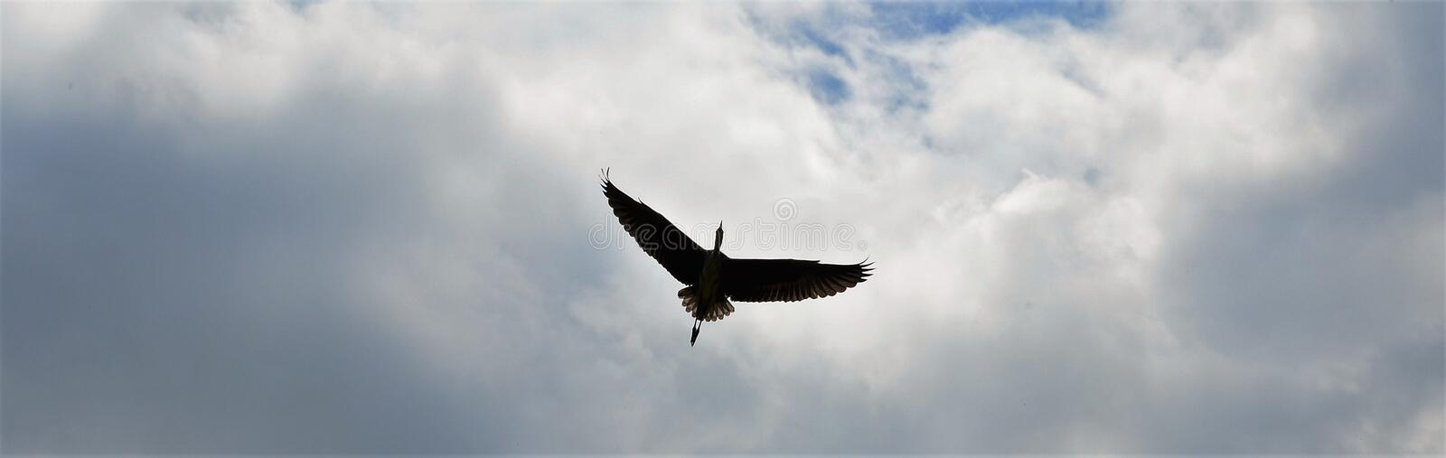 Vliegende reiger boven Zwolle royalty free stock images