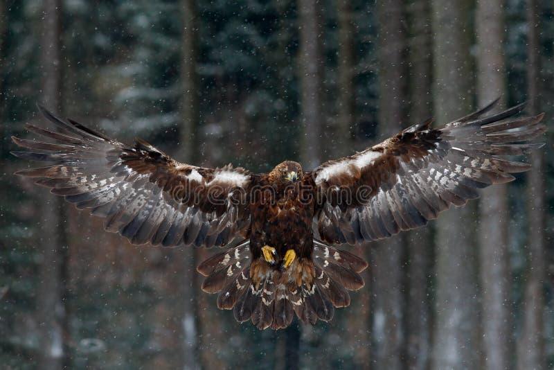 Vliegende roofvogels stock foto's
