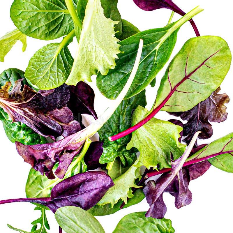 Vliegende Saladebladeren die op witte achtergrond worden geïsoleerd Verse gemengde salade met arugula, sla, spinazie royalty-vrije stock foto