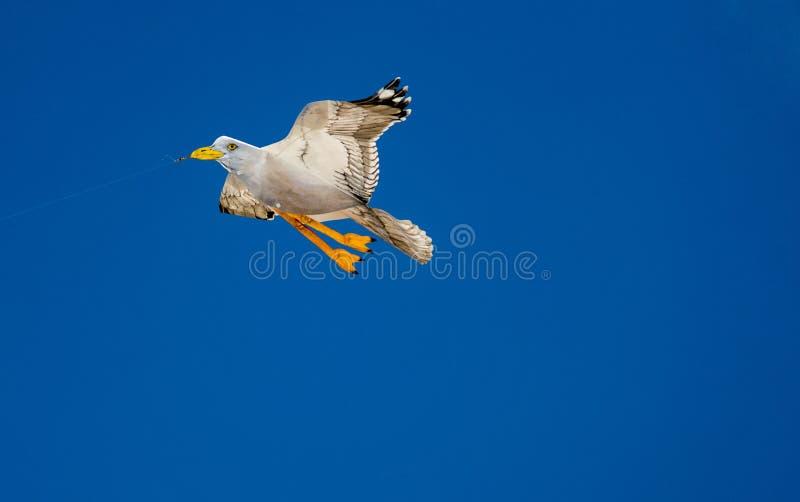 Vliegende valse zeemeeuwvlieger stock afbeelding