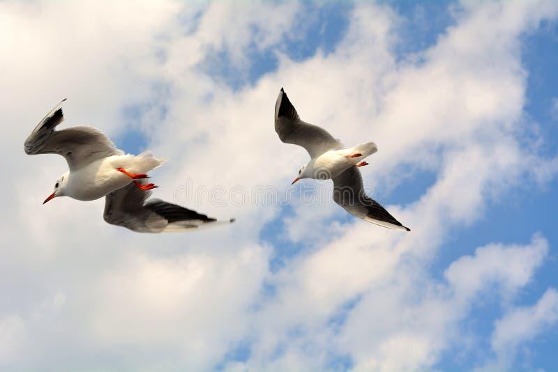 Vliegende vogels royalty-vrije stock foto's