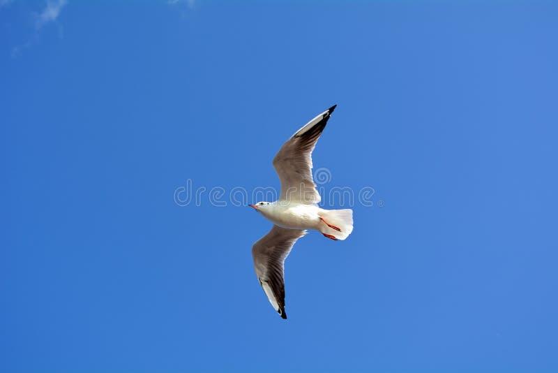 Vliegende vogels stock afbeelding