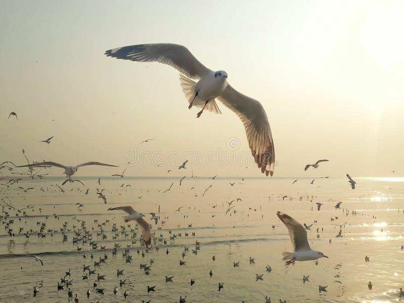 Vliegende vogels royalty-vrije stock fotografie