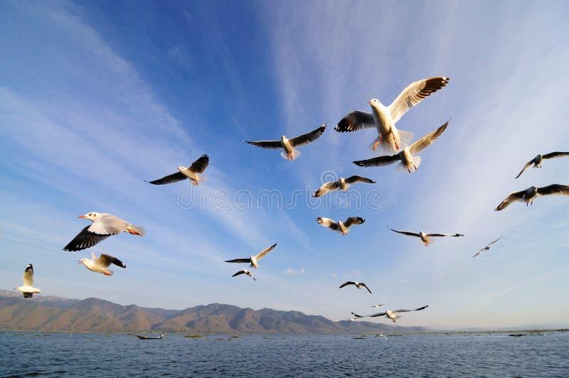 Vliegende vogels in blauwe hemel stock afbeeldingen