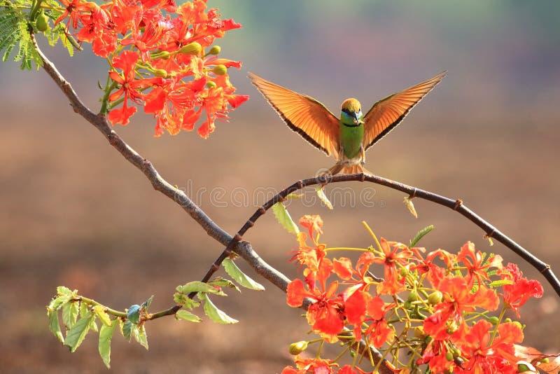 Vliegende vogels en Rode bloemen stock afbeelding