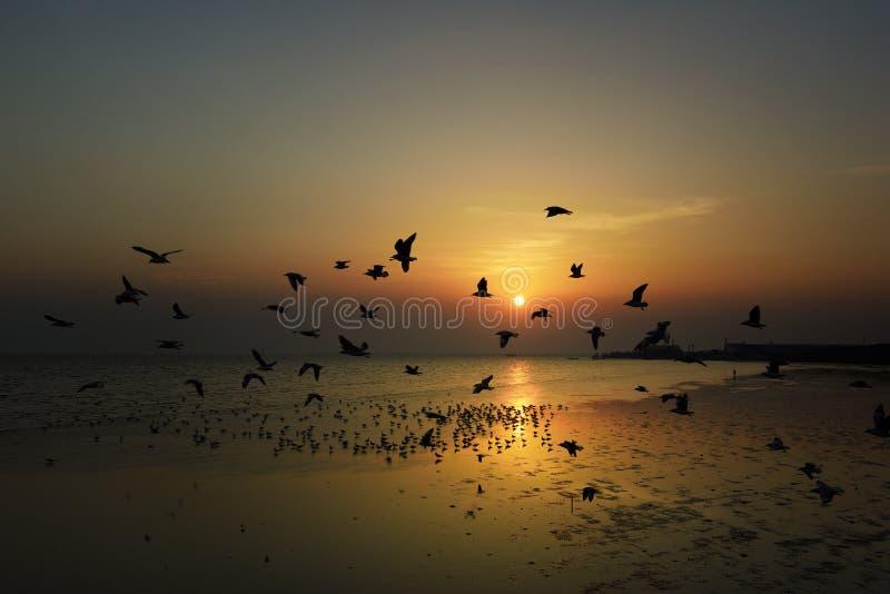 Vliegende vogels over de overzeese oppervlakte royalty-vrije stock afbeeldingen
