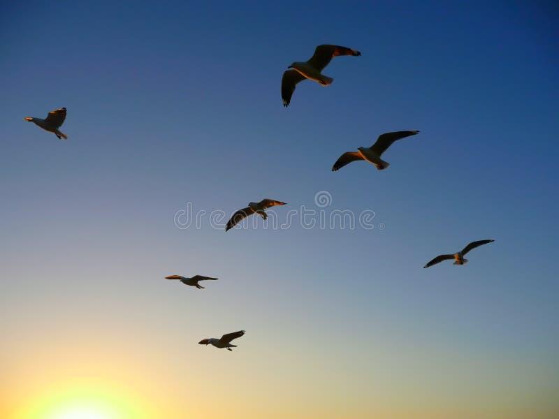 Vliegende vogels tijdens zonsondergang royalty-vrije stock foto's