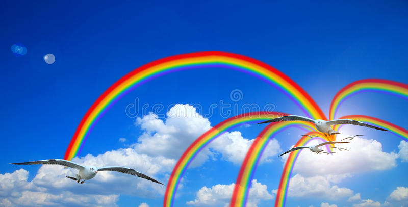 Vliegende zeemeeuw in hemelzon met wolken en regenboog blauwe hemel met wolkenachtergrond stock foto