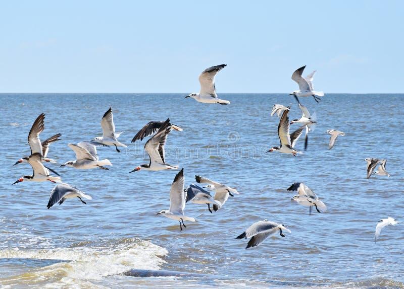 Vliegende zeemeeuwen boven het water royalty-vrije stock afbeeldingen