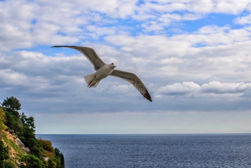 Vliegende zeemeeuwen in de hemelzomer in de Krim stock foto's