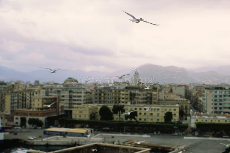 Vliegende zeemeeuwen en de mening van Palermo, Italië stock foto's