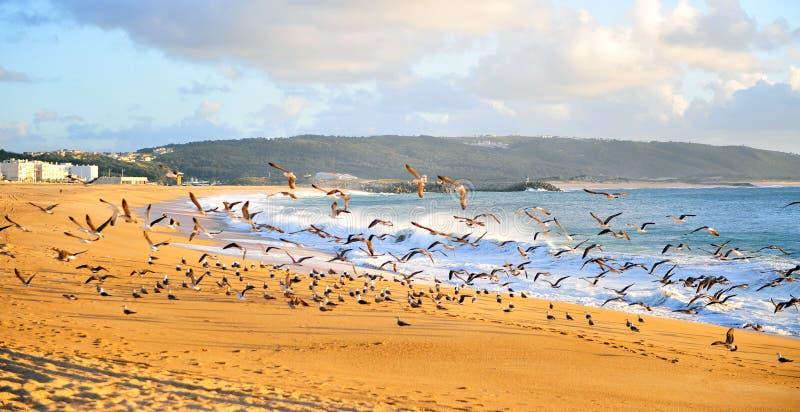 Vliegende zeemeeuwen op strand van Nazare-toevlucht stock fotografie