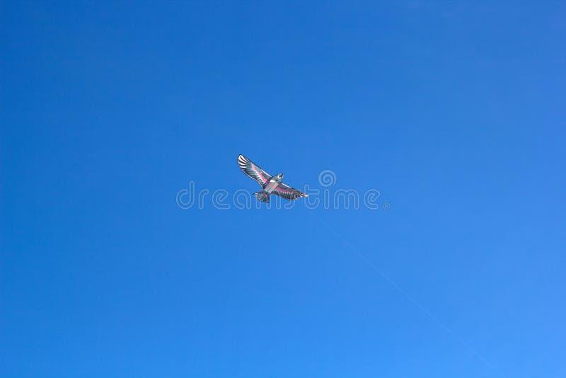 Vlieger in de vorm van een Vogel royalty-vrije stock fotografie
