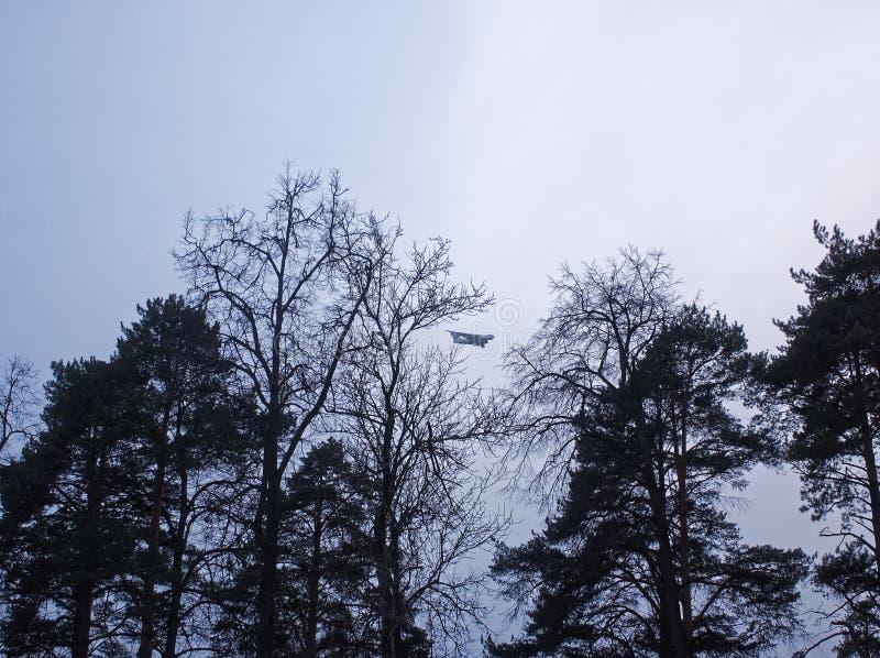 Vliegtuig door de bomen op een bewolkte dag stock foto