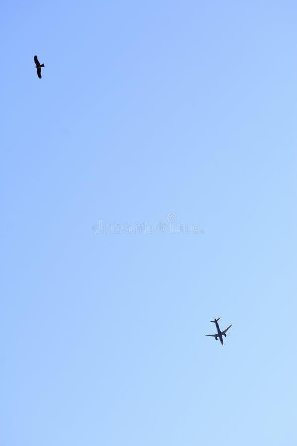 Vliegtuig en Vogel die in de hemel in de verschillende ruimte van het richtingenexemplaar vliegen royalty-vrije stock afbeeldingen