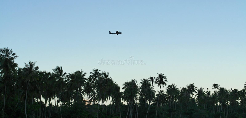 Vliegtuig over palmen stock foto's