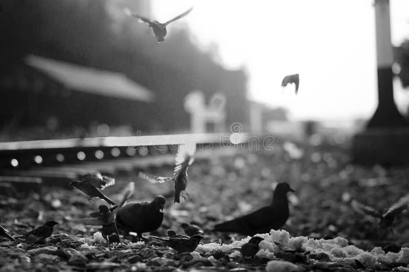 Vliegvogel royalty-vrije stock foto