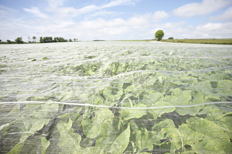 Vlies-abgedeckte Getreide stockbild