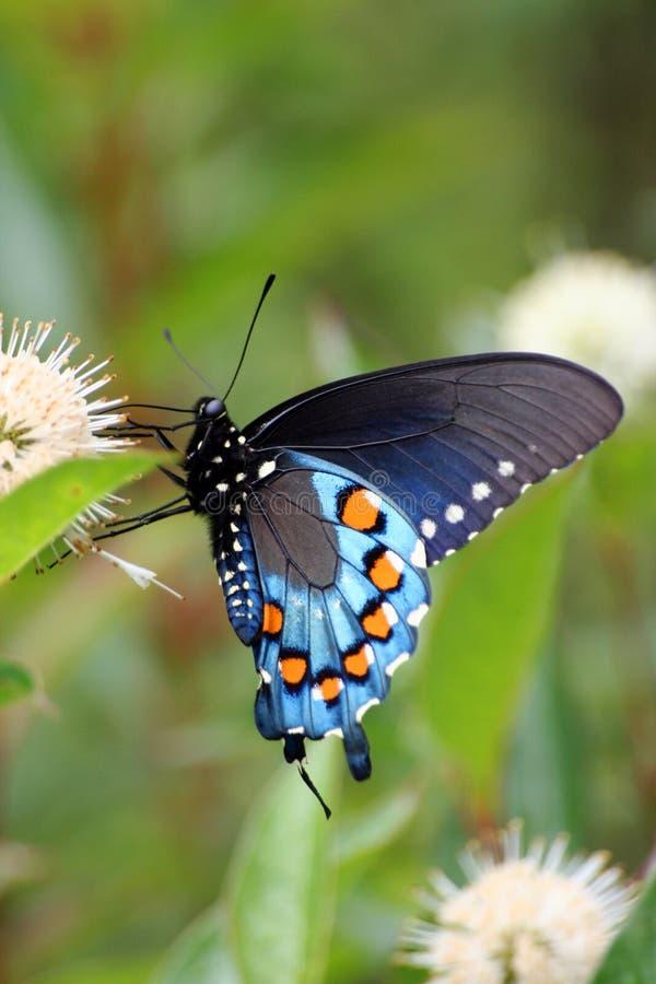 Vlinder stock foto's