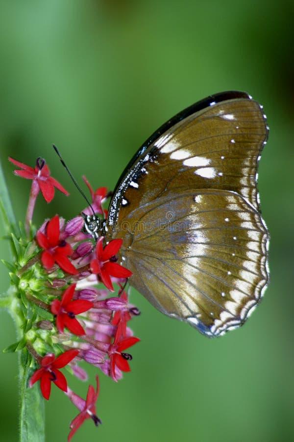 Vlinder 2 royalty-vrije stock afbeelding