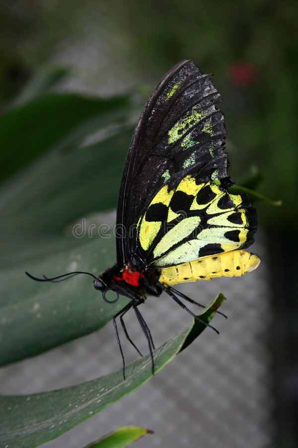 Vlinder #2 royalty-vrije stock afbeeldingen