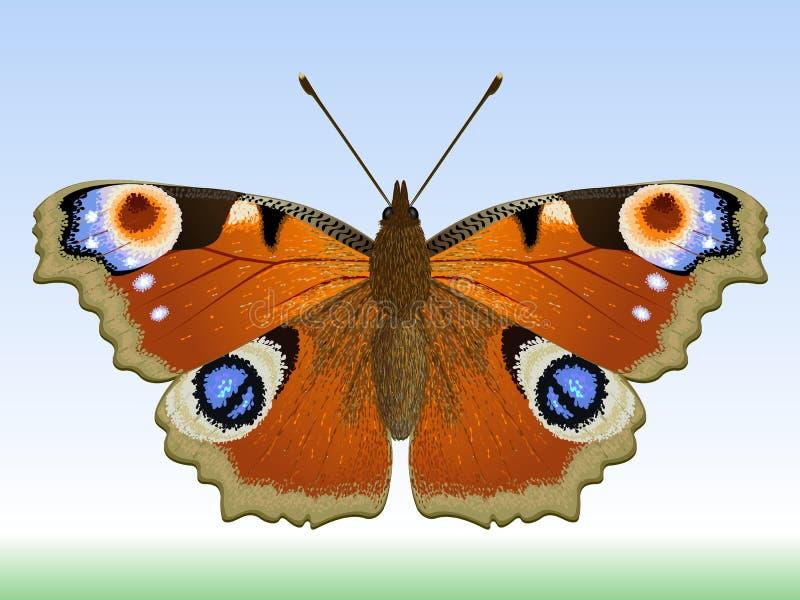 Vlinder. royalty-vrije illustratie